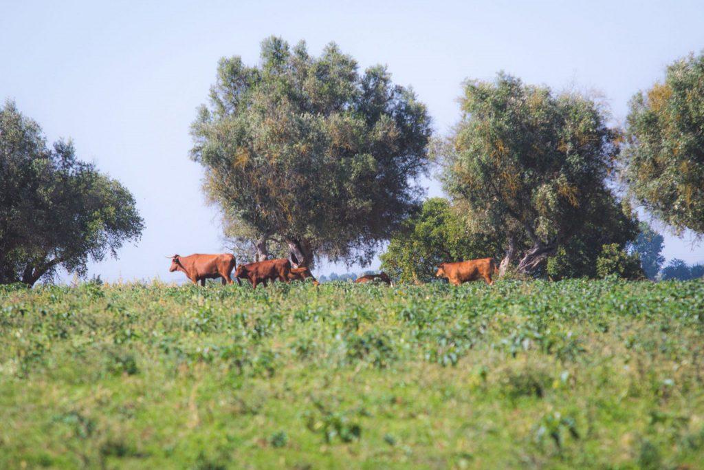 Lagoalva - Agricultura