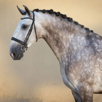 Lagoalva: Horses - 353 - Haiti