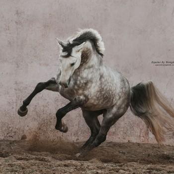 Lagoalva: Cavalos - 406 - Leão