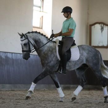 Lagoalva: Cavalos - 409 - Liberal