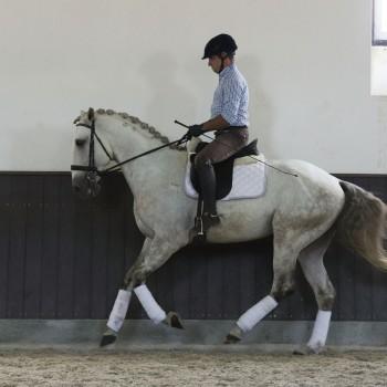Lagoalva: Cavalos - 410 - Leopardo