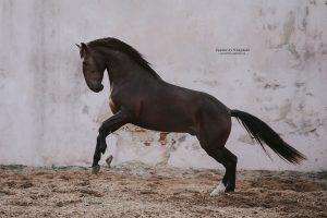 Lagoalva: Horses - 442 - Mistral