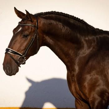 Lagoalva: Cavalos - 442 - Mistral