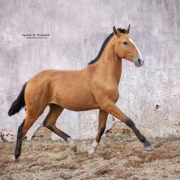 Lagoalva: Horses - 446 - Orfeu