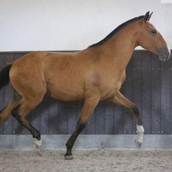 Lagoalva: Cavalos - 446 - Orfeu